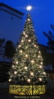 Custom 34' Oregon Cascade Fir Tree