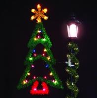 5' Ponderosa Pine Tree